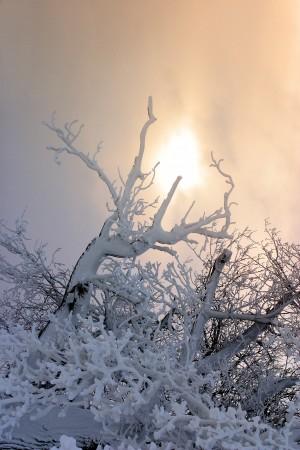 Winter Solstice Celebration @ Thirteen Moons