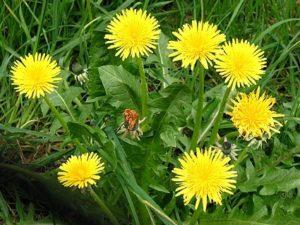 Wild Herb Walk and Lunch @ Thirteen Moons Wellness